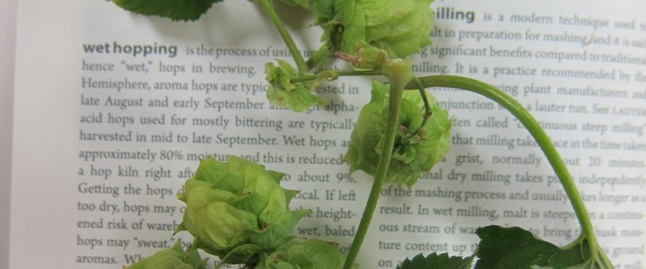 Wet Hop Beer: The Real Harvest Brew