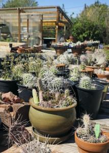 Grow Wild Nursery